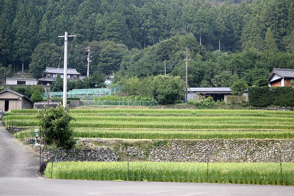 石垣積みされた段々畑。何気ない風景なのですが、整然とした美しさが